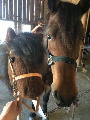 Steckenpferd neben echtem Pferd für die Setie Aktuelles